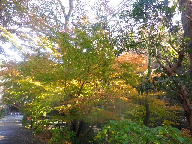 05) 山門と鐘楼との間でも、まだ緑色の葉が多い。