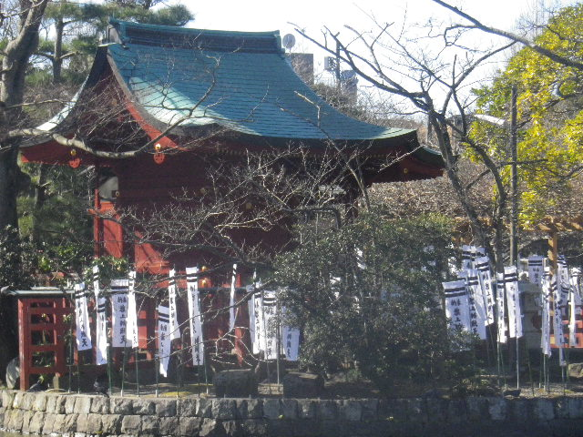01-2) 紅梅は咲き始めたかナ?っとズームで偵察したが、まだみたいダ・・・ ・・・  _ 16.01.27 鎌倉「鶴岡八幡宮」の梅