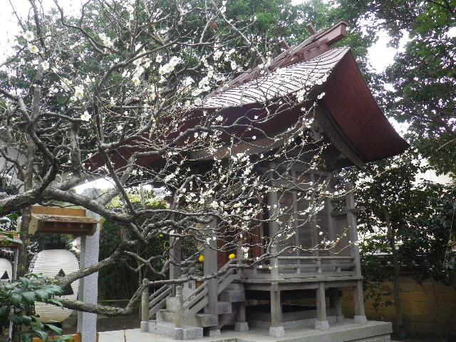 13-2) 16.02.24 満開前で、私にとって見頃の梅 鎌倉「宝戒寺」。