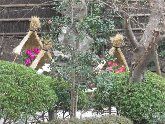 01-2) ' ぼたん園 '  _ 16.02.24 雪が降りそうな日、立春を大きく過ぎたことに気づいた 鎌倉「鶴岡八幡宮」。