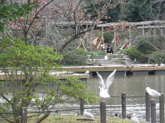 01-4a) 手前の中之島と奥の ' ぼたん園 '  _ 16.02.24 雪が降りそうな日、立春を大きく過ぎたことに気づいた 鎌倉「鶴岡八幡宮」。