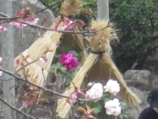 01-4b) ' ぼたん園 '  _ 16.02.24 雪が降りそうな日、立春を大きく過ぎたことに気づいた 鎌倉「鶴岡八幡宮」。