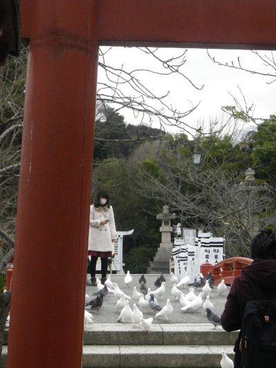 """02-4) """" 旗上弁財天社 """"  _ 16.02.24 雪が降りそうな日、立春を大きく過ぎたことに気づいた 鎌倉「鶴岡八幡宮」。"""