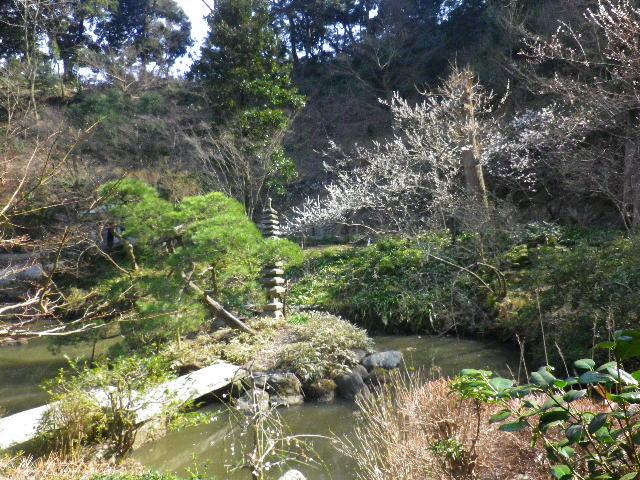 08-1) 16.03.04 鎌倉「光則寺」梅が咲く頃