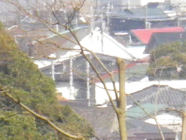 14-4) 16.03.04 鎌倉「光則寺」梅が咲く頃