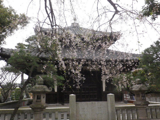 02-1) ' 日蓮御分骨堂 ' 方向 _ 16.03.30 鎌倉「本覚寺」の枝垂れ桜