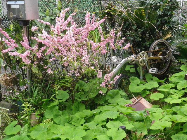 02) 退廃的金属オブジェに温もりを添える、今年も咲いた桃色の桜みたいな花。