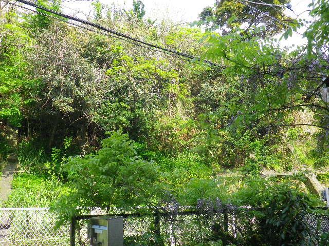 01) 16.04.16 藤が咲いた  _ 地平線が丸く見えるほど広大敷地の某邸宅