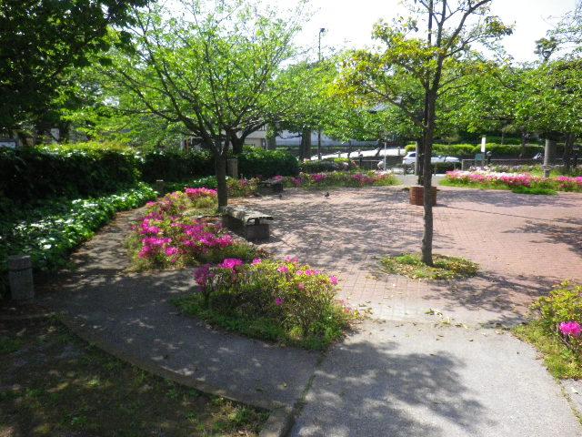 """06)   16.04.26 鎌倉 """" 若宮大路公園 """" 低木のツツジが咲き揃う頃"""