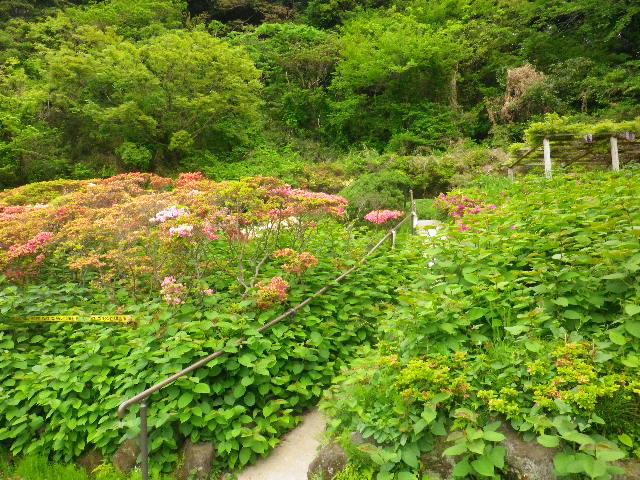 05) 16.04.27 葉山「花の木公園」のツツジを観に行った!・・・ ・・・ ・・・ ・・・のだけれども、遥か前に咲き終わって ' 花殻の絨毯 ' ?だった。 アワワワワ 嗚呼