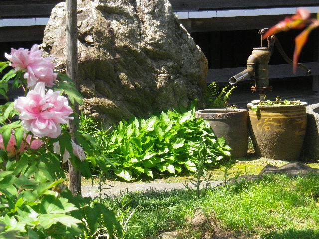 09-1) _ 16.04.26 鎌倉「九品寺」ナニワイバラが咲き揃う頃