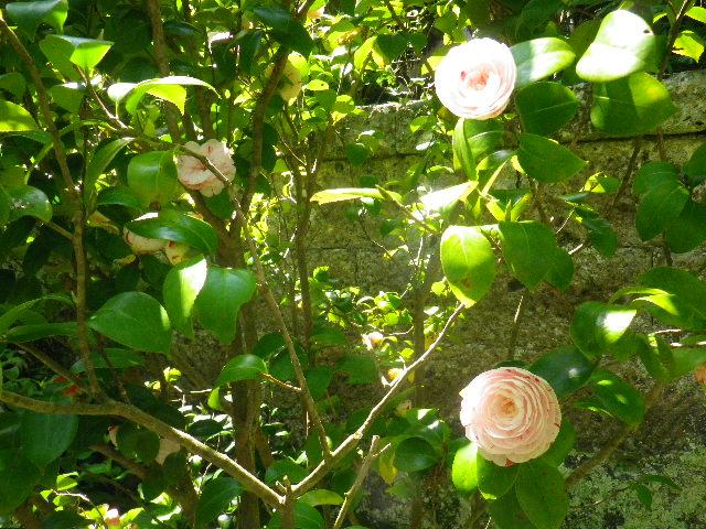 04)  _ 16.04.30 晩春の・・・というよりも、立夏直前というべき緑が濃い  鎌倉「安国論寺」。