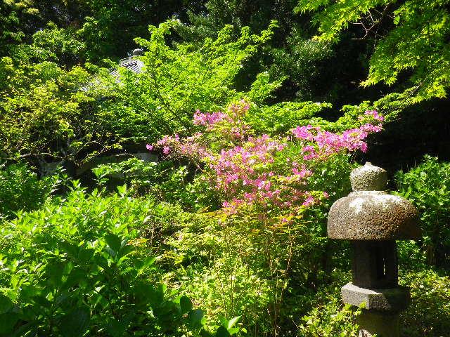05)  _ 16.04.30 晩春の・・・というよりも、立夏直前というべき緑が濃い  鎌倉「安国論寺」。