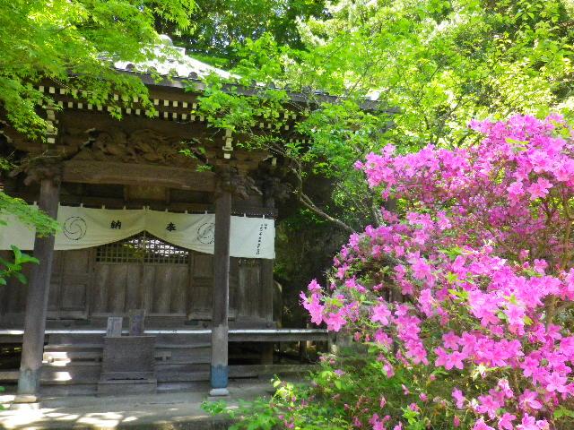 06-2)  _ 16.04.30 晩春の・・・というよりも、立夏直前というべき緑が濃い  鎌倉「安国論寺」。