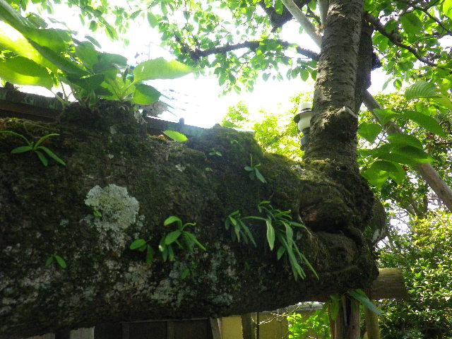 02-2) _ 16.04.30 立夏直前の 鎌倉「教恩寺」