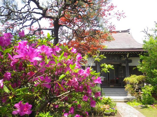 04) _ 16.04.30 立夏直前の 鎌倉「教恩寺」