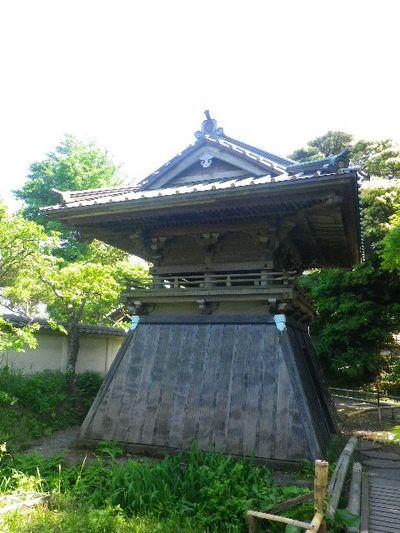 05)  _ 16.05.05 白藤に蜜蜂が集う時期の、鎌倉「英勝寺」。