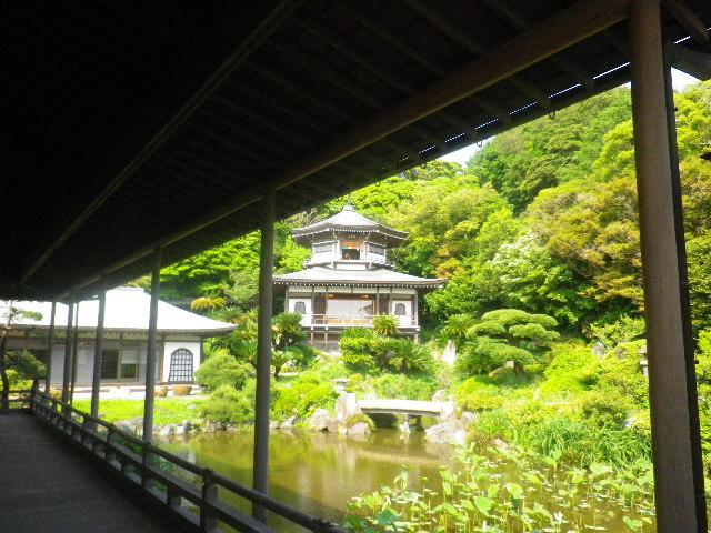 02)  16.05.21 鎌倉「光明寺」石庭にサツキが色を添える頃