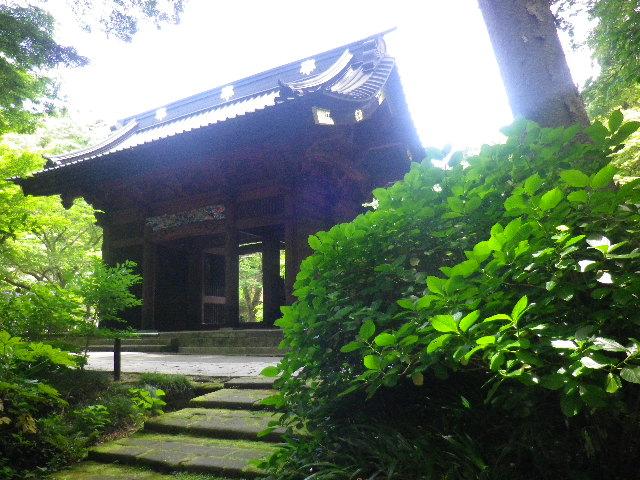 11) 駐車場誘導路周辺 _ 16.06.04 鎌倉「妙本寺」西洋紫陽花よりも先に、ヤマアジサイ/ガクアジサイが見頃の日。