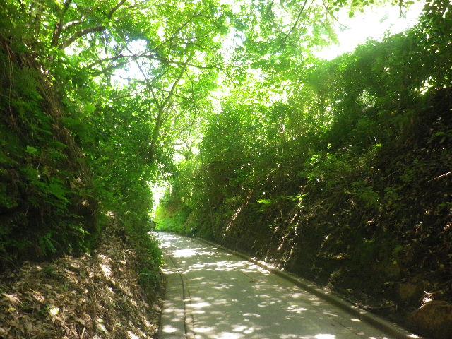 03) 下り坂に差し掛かった場所から _ 16.06.11 自転車を押して ' 亀ヶ谷坂切通し ' ~ 鎌倉「長寿寺」通用口周辺と山門周辺
