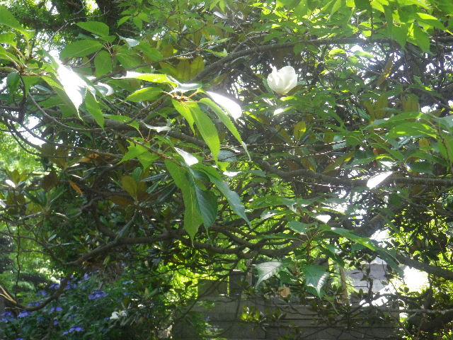 C04-1)   16.06.27 鎌倉「長勝寺」今年一年の折り返しに差し掛かる頃