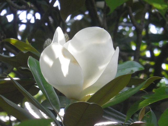 C04-2)   16.06.27 鎌倉「長勝寺」今年一年の折り返しに差し掛かる頃