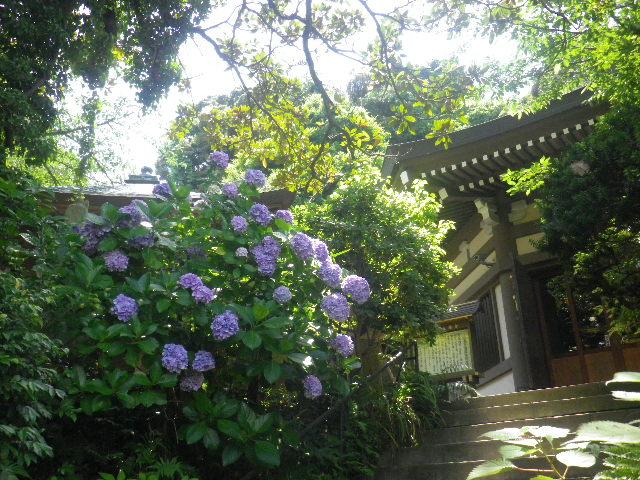 E01)   16.06.27 鎌倉「長勝寺」今年一年の折り返しに差し掛かる頃