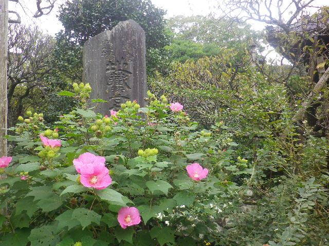 08) _ 16.09.29 鎌倉「宝戒寺」 ' 萩の寺 ' とも呼ばれるが、今年の花は台風に甚振られた。