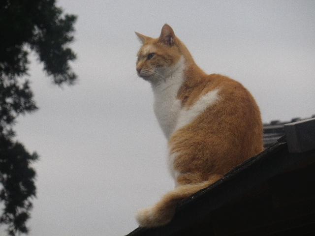 13)  見上げたら、屋根の上に ' ニッキー・ホプキンス ' (本名 ' ルッサム '   )。  _ 16.10.29 アソコの アレ