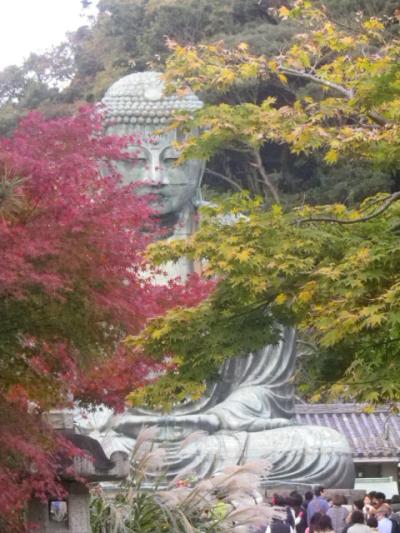 02-2)   16.11.26 鎌倉「高徳院」紅葉の頃  門扉のそとから大仏さまのご尊顔を拝した