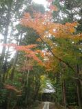 16.11.28 初冬の 鎌倉「寿福寺」