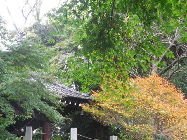 01-2)   16.11.28 初冬の 鎌倉「妙本寺」