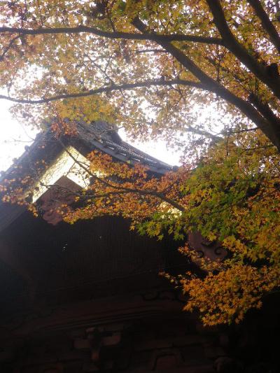 02-2)   16.11.28 初冬の 鎌倉「妙本寺」