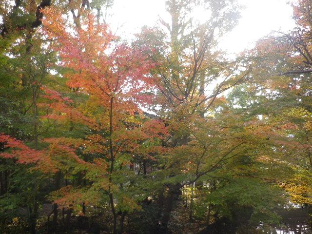 06-3) ' 柳原神池 '  _ 16.11.28 初冬の 鎌倉「鶴岡八幡宮」