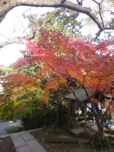 1-03)  16.11.30 初冬の 鎌倉「長勝寺」
