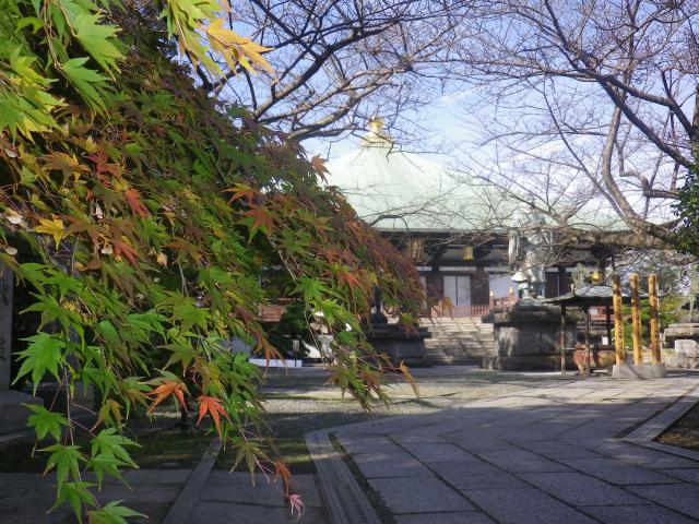 5-02)  16.11.30 初冬の 鎌倉「長勝寺」