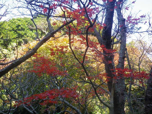 02-7a)   16.12.02 初冬の 鎌倉「瑞泉寺」