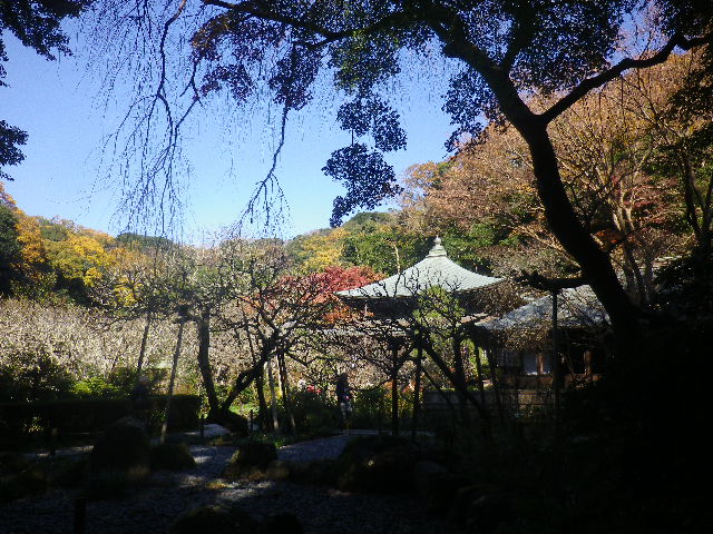 04-1)   16.12.02 初冬の 鎌倉「瑞泉寺」