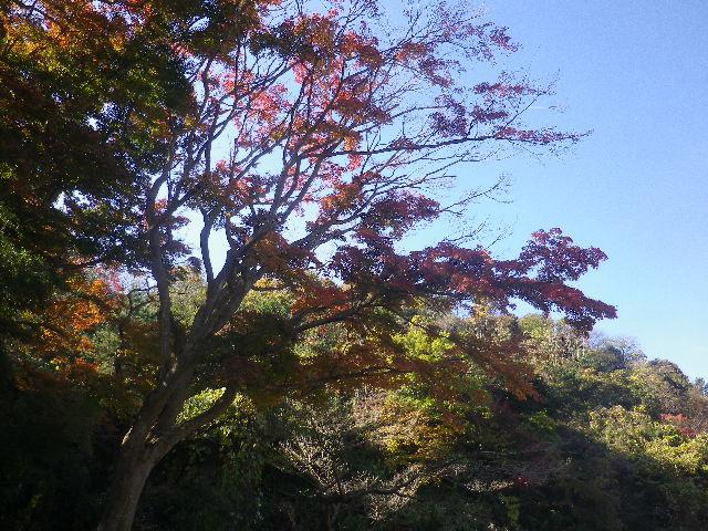 01)   16.12.02 初冬の 鎌倉 「永福寺跡」