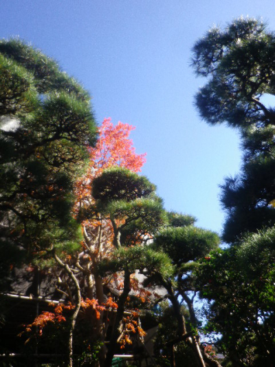 04-1)   16.12.02 鎌倉「大巧寺」 初冬の紅葉と黄葉
