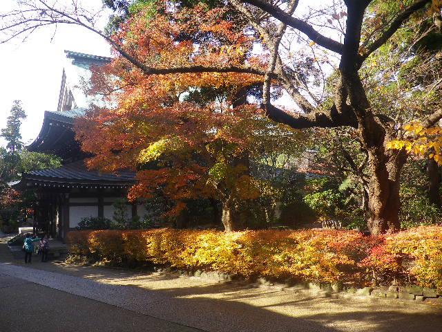 E01)  16.12.05 初冬の 鎌倉「円覚寺」
