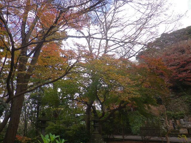 04)   16.12.15 鎌倉「妙本寺」 冬至を迎えようとする頃