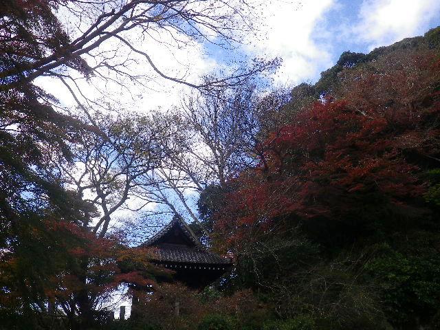 05)   16.12.15 鎌倉「妙本寺」 冬至を迎えようとする頃