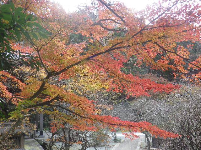 08)   16.12.15 鎌倉「妙本寺」 冬至を迎えようとする頃