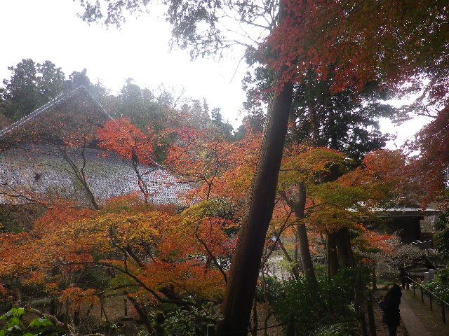 10)   16.12.15 鎌倉「妙本寺」 冬至を迎えようとする頃