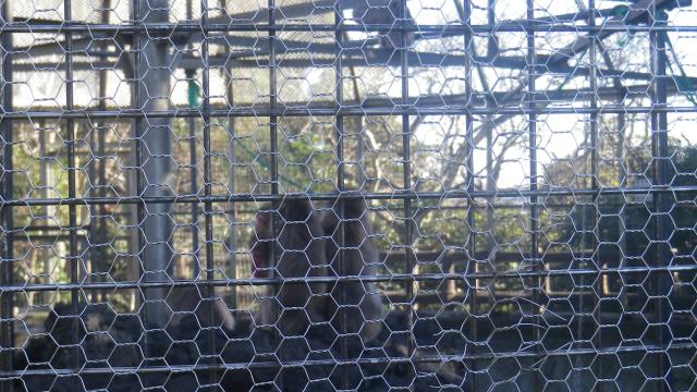 06a) 猿舎の猿を撮ったつもり。いつもテキトーな全自動モードで撮っているから、細かい金網に焦点が合って何だかワカラン。  17.01.01 平成二十九年 元旦 逗子「披露山公園」