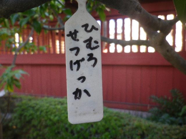 01-1)   ' ひむろせつげっか ' 17.01.13 鎌倉「大巧寺」 初詣
