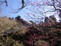 07-2)    17.01.28 本年は今日が旧正月元日の 鎌倉「妙本寺」