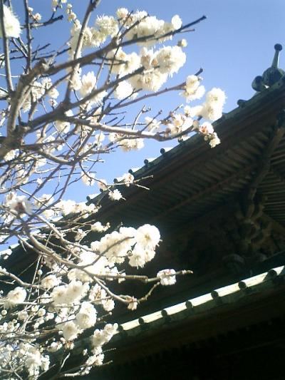 05_18545350082_o 05) 鎌倉扇ガ谷「東光山 英勝寺」 仏殿の左側面を見上げる。