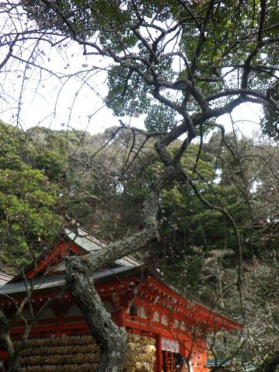 04-1)    17.0218  のどが渇いたから焼鳥くった _ 鎌倉「焼とり 秀吉」